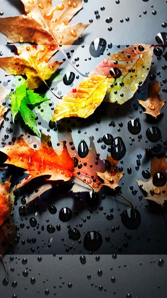 593 best Fall Wallpaper! images on Pinterest | Fall ...