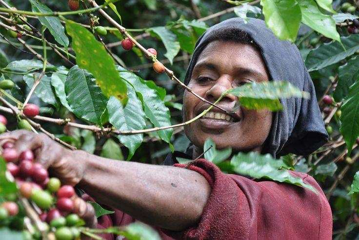 Cofi-Com - Responsive website redevelopment with CMS #coffee #coffeebeans