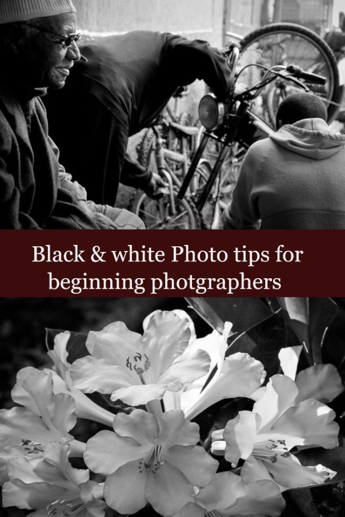 Black and white photo tips for beginners - try these easy and fun photography tips and techniques when you shoot and process your images for black and white photography. Check out the details to the photography post below.