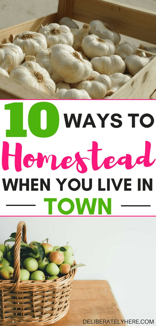10 ways to homestead when you live in town