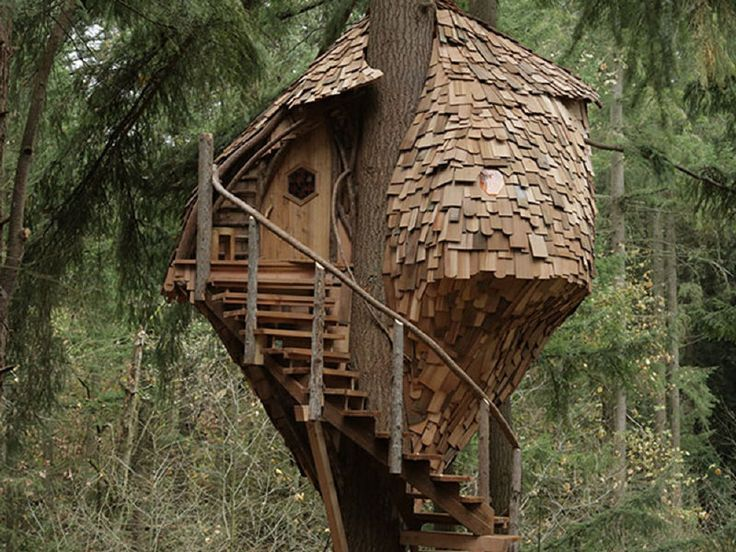 pete nelson treehouse master Beehive