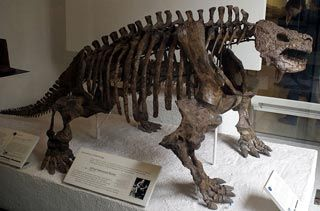The Remarkable Scutosaurus - Permian Giant