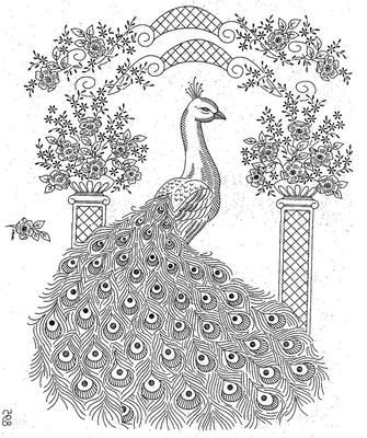 Laura Wheeler 895 Large Peacock Pattern for Bedspread or quilt top. A 1960s hand embroidery pattern.