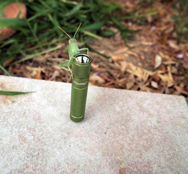 ThruNite Green Ti with green grasshopper  by Galatia Demetriou from FB~ http://thrunite-store.com/thrunite-ti-xpe-led-aaa-flashlight-p-16.html?cPath=3