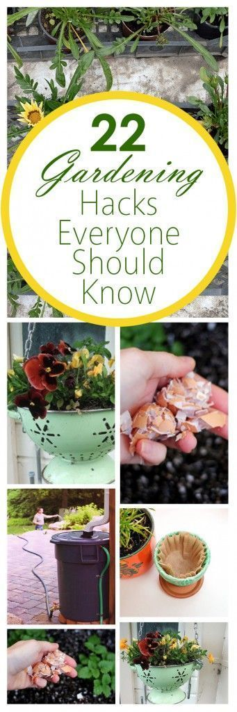 22 Gardening Hacks Everyone Should Know – Donna Patterson