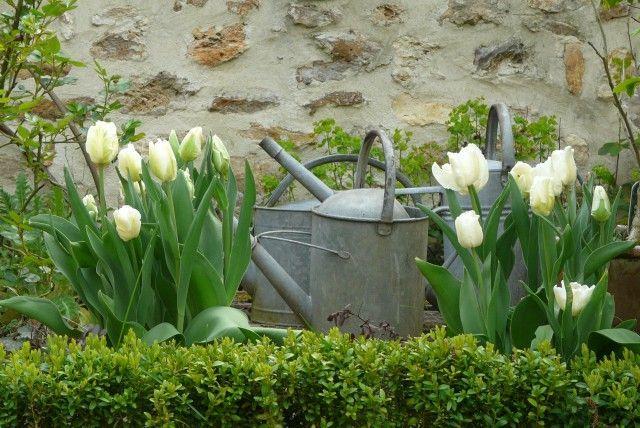 Tulips: Spring Flowers, Spring Gardens, Secret Gardens, April Shower, Spring Fever, Spring Tulip, May Flowers, White Tulip, Spring Style