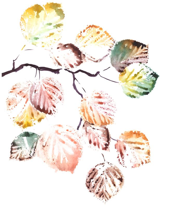 Bright watercolor painting of an autumn branches of alder tree, rowan, birch and aspen. Scanned raster illustration.
