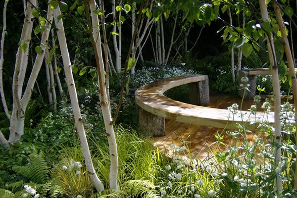 17 best images about berke bome on pinterest gardens for Silver birch trees for small gardens