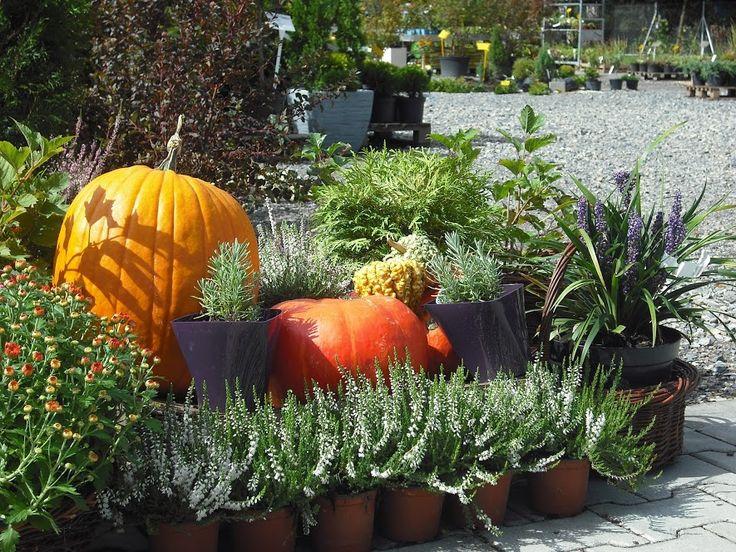 Jesienna kompozycja z dyniami