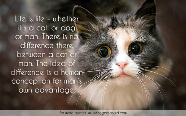 Life is life - whether it's a cat, or dog or man. There is no difference there between a cat or man. The idea of difference is a human conception for man's own advantage.  #advantage #cat #conception #difference #dog #human #idea #life #man #quotes
