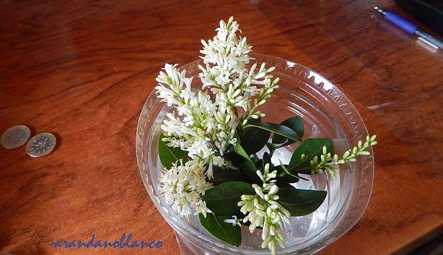 parquealamillo-encinarosa: Ligustrum japonicum / Aligustre del Japón - En el ...