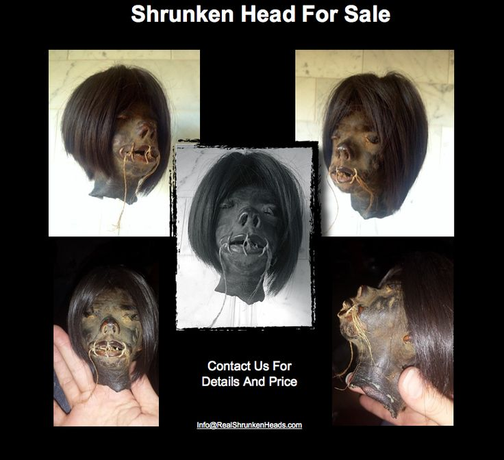 Shrunken Heads For Sale! http://www.shrunkenheadsodditiesmacabre.com/ Info@RealShrunkenHeads.com https://www.facebook.com/RealShrunkenHeads/ https://twitter.com/OdditiesWorld www.RealShrunkenHeads.com www.Human-Oddities.com