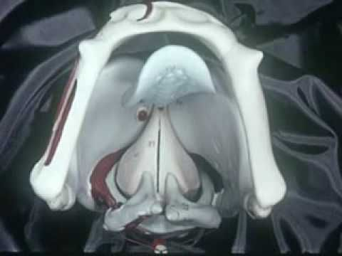"""YouTube """"The Human Voice System"""". Old video, but provides a fantastic visual for students: where the larynx is, etc."""