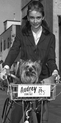 Mr. Famous was Audrey Hepburn's first beloved Yorkshire Terrier, and actually appeared with her in a scene in Funny Face. DID YOU KNOW? It was Audrey Hepburn, who actually introduced Yorkshire Terriers to the world of celebrities, this big fashion to have a lap-dog started in Hollywood exactly from Audrey and her little friend Mr. Famous.