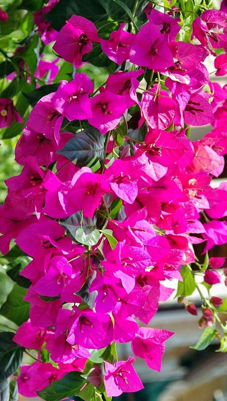 flower power garden design