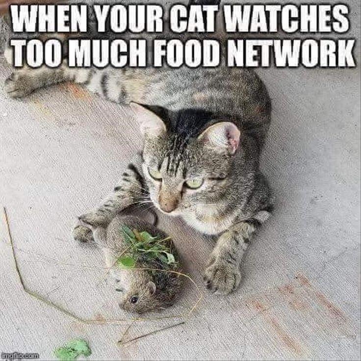 Was ist besser als ein paar Katzenmemes an einem Samstag? – einfach – # als #besse … – Funny Animals