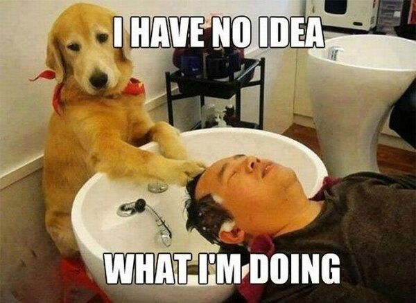 58d26dbcc23628f14bfff9cb9cf9ff70 funny dogs funny animals 141 best dog memes images on pinterest animals, funny animals,Dog Funny Meme
