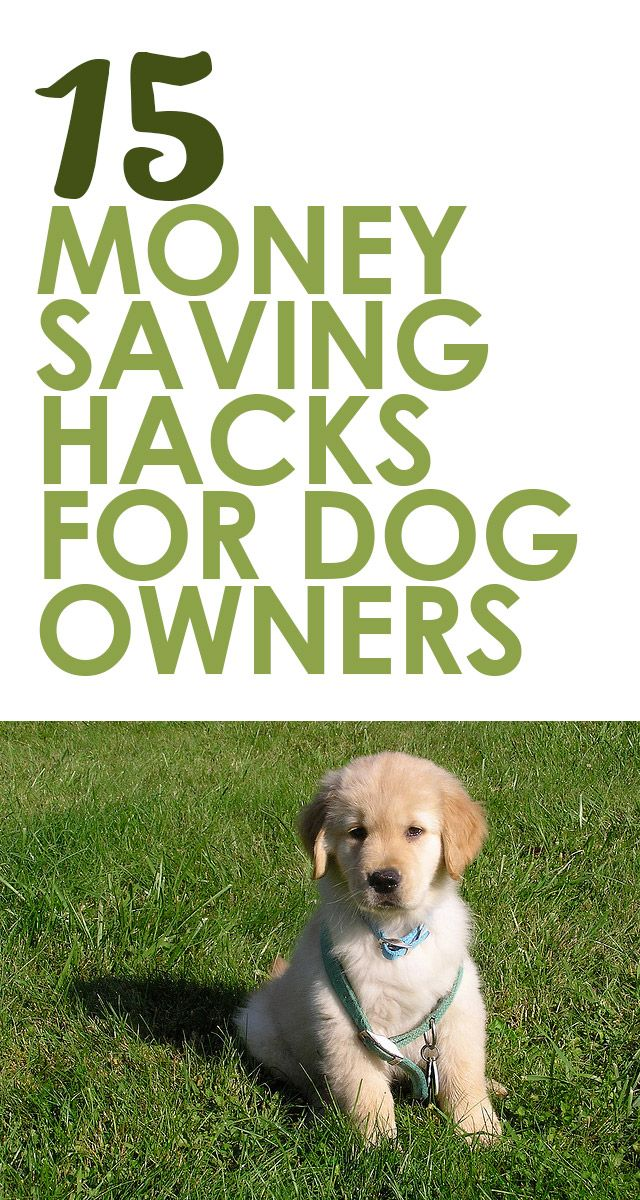 15 Money Saving Hacks for Dog Owners http://iheartdogs.com/15-easy-money-saving-tips-for-dog-owners/