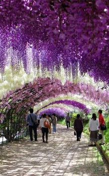 Ashikaga Flower Park   Travel   Vacation Ideas   Road Trip   Places to Visit   09   Tourist Attraction   City Park   Botanical Garden