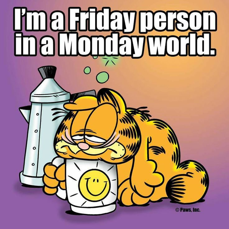 Happy Monday Meme Funny : Best images about monday on pinterest