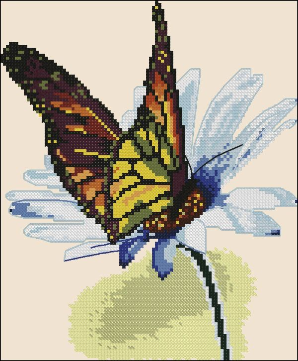 Gallery.ru / Фото #1 - Motyl na margarete - zuzas