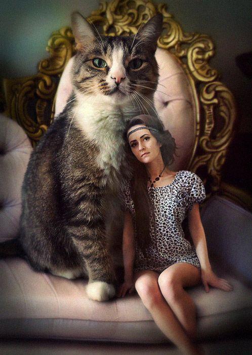 My best friend - cat-pet #pet #kitty