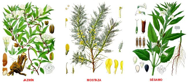 PLANTAS MEDICINALES: CLASIFICACIÓN DE LAS PLANTAS MEDICINALES SEGÚN SUS PROPIEDADES MEDICINALES