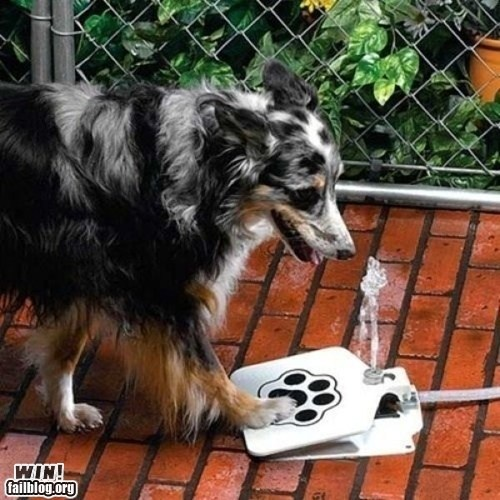 Dog-operated water dispenser attachment