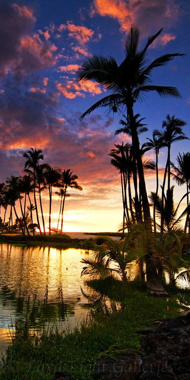 Hawaii sunset, A DREAM COME TRUE... ♪ ༺♥༻ ~♥~BE STILL MY HEART~♥~ HELP YOURSELF & ENJOY, SMILES~♥~ ༺♥༻ ♪