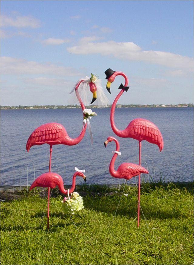 44 best Flamingo Funny images on Pinterest | Flamingos ... - photo#22