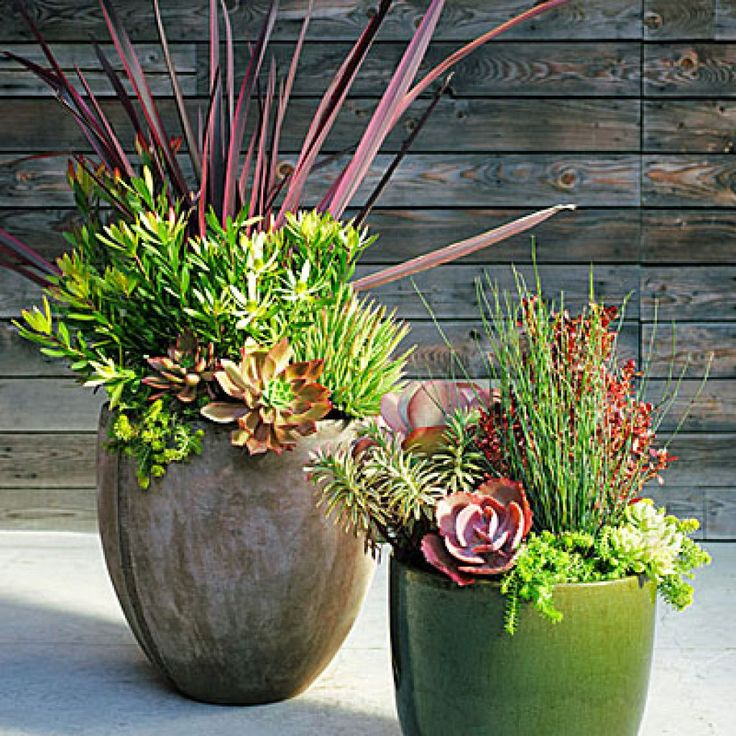 Succulent mini landscape Plum-colored foliage is a rich accent against soft greens in these easy-care containers. Arrange taller plants in the center or back, trailers near the pot's edges. For immediate effect, choose large plants and big pots (shown above left: 10 in. across, 14 in. tall; right: 16 by 18 in.). Design: Daniel Nolan, Flora Grubb Gardens (floragrubb.com) Container at left (clockwise, from bottom left corner of pot): Aloe humilis (6 in.); Phormium 'Guardsman' (5 gal.)…