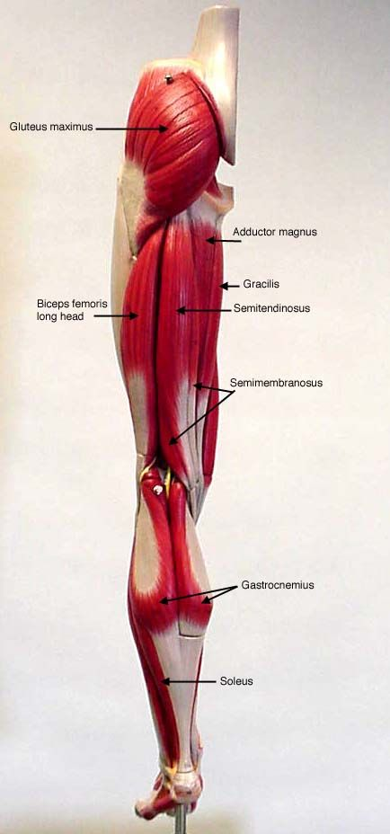 Anatomical Models, Anatomy Charts, Anatomy Posters at ...
