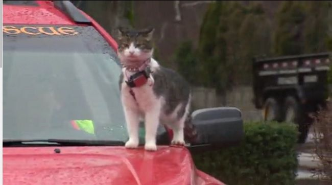 Car-surfing cats spark police call but owner says pets loves it