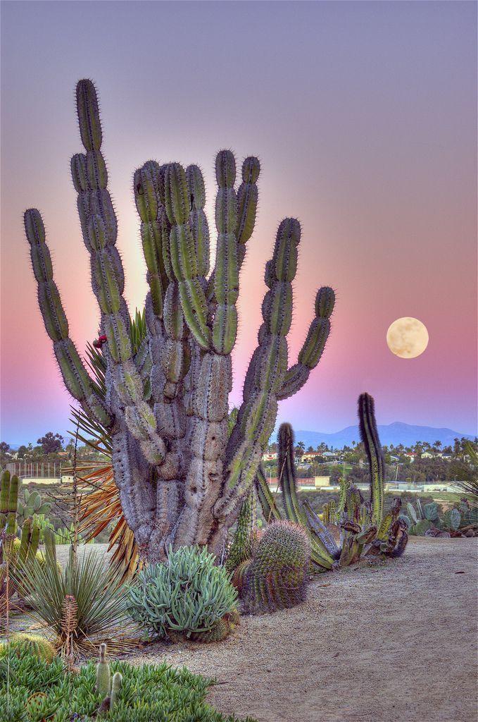 The Cactus Garden in Balboa Park, San Diego, California