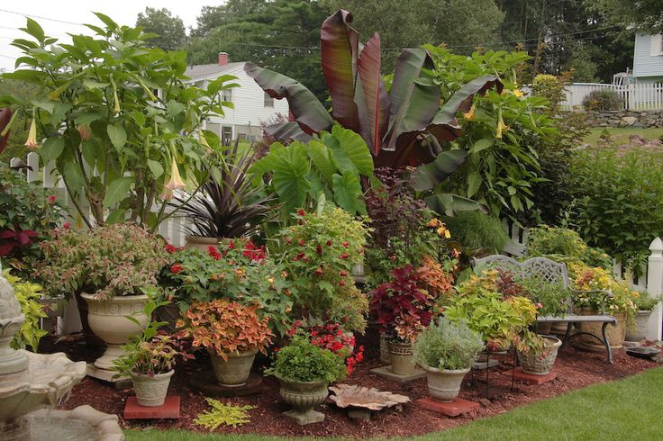 17 best images about maryam 39 s planters on pinterest container gardening planters and purple - Tropical container garden ...