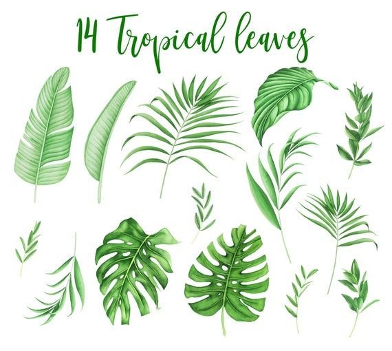 Watercolor Tropical Leaves Clipart Monstera Palm Leaf Greenery