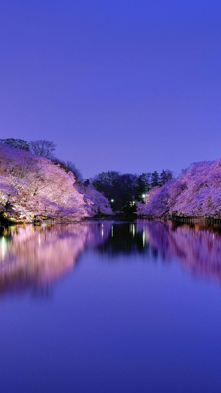 japan, osaka, city, park, lake, light, lights, night, blue, sky, trees, cherries, cherry, flowering