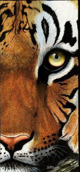 Tiger detail