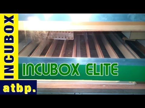 INCUBOX Enterprise new innovation! the INCUBOX ELITE Incubator ng Bayan  incubox, incubator ng bayan, egg incubator philippines, incubox elite, incubox enterprise, incubator philippines, chicken incubator, chicken egg incubator, incubator for sale philippines, incubox incubator ng bayan, incubators, chicken, chicken eggs, egg incubator