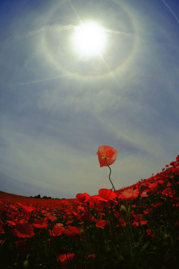 87 Best Eternal Blue Sky Chords Images On Pinterest Altered Book