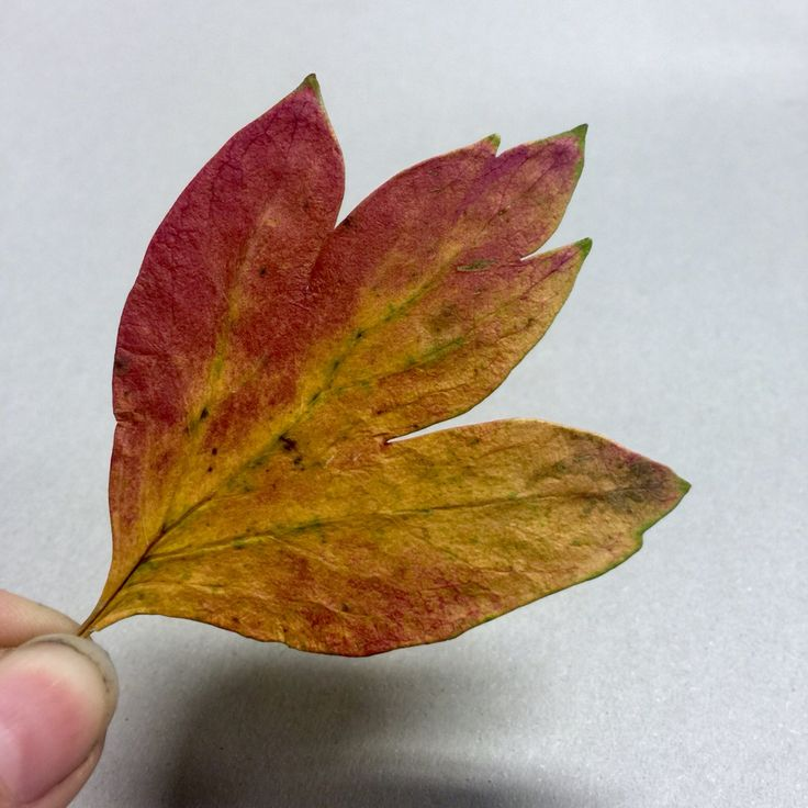 This leaf is cool
