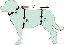Collar metalico de adiestramiento con cadena de eslabón fino acero inoxidable Sprenger - www.adiestramiento-perros.es