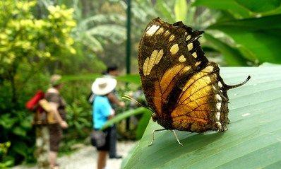 Actividades en el Gamboa Rainforest Resort, Panamá