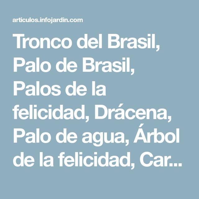 Tronco del Brasil, Palo de Brasil, Palos de la felicidad, Drácena, Palo de agua, Árbol de la felicidad, Carey - Dracaena fragans 'Massageana'
