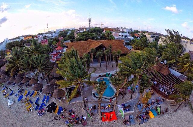 Parrot club playa del carmen