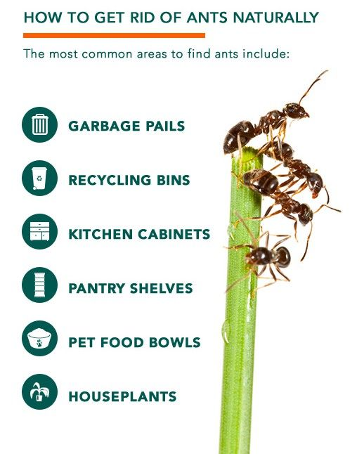 How To Get Rid Of Ants In Kitchen Cabinets: 53 Best Org. Garden: Pest Control Images On Pinterest