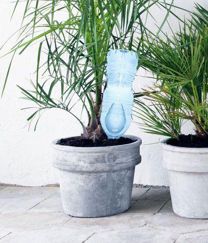 bottiglia d'acqua rovesciata per le piante