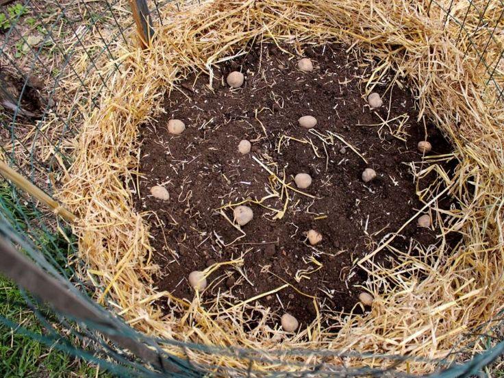 tour à pommes de terre (1)