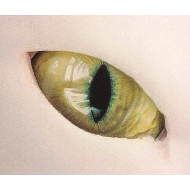 Cats eye #art #drawing #sketch colored pencils | Art ...