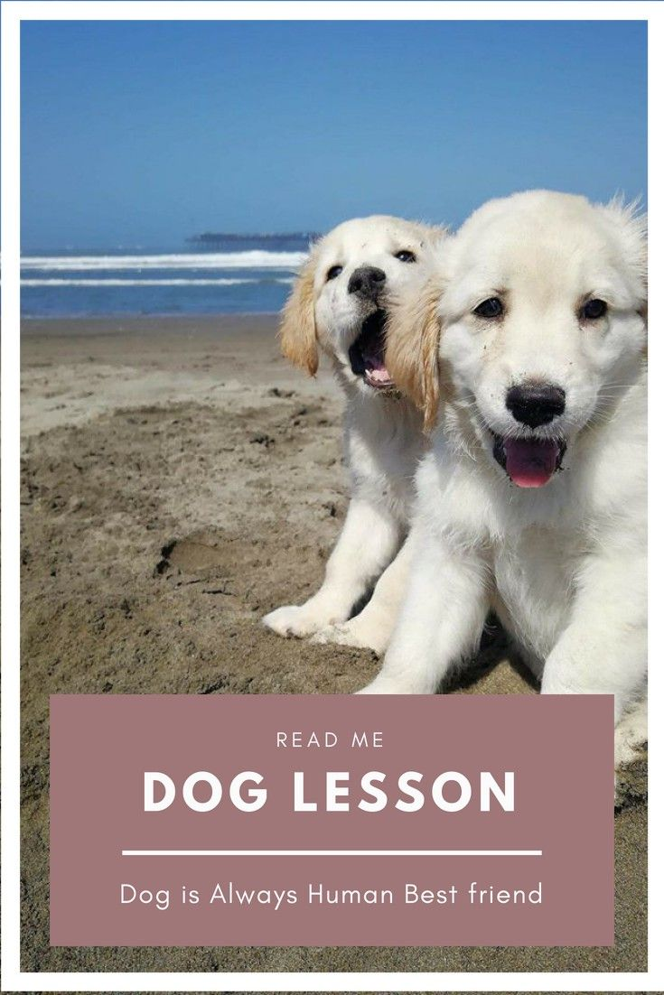 dog training use this advice to get a well trained pet for more rh pinterest com puppy well visit schedule
